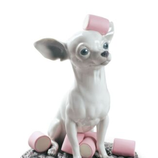 Chihuahua with Marshmallows